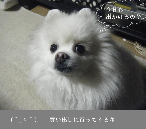 DSCF9256.jpg