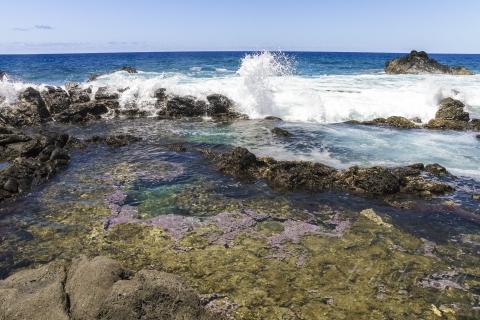 サンゴみたいな藻みたいな