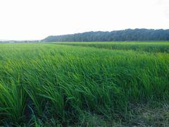 [写真]農園前の田んぼの様子