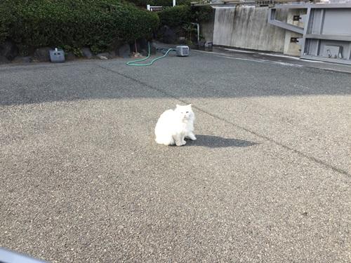 猫のお見送り