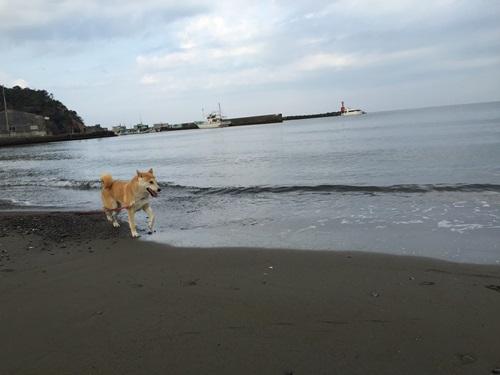 海で遊ぶ4