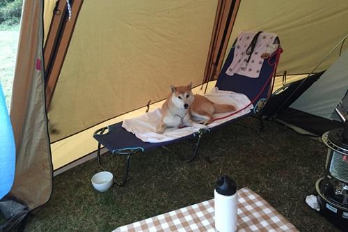 キャンプ11