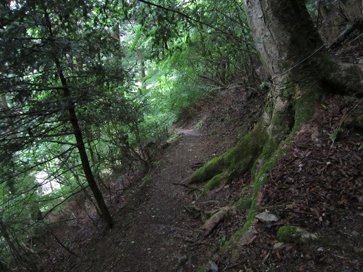 龍泉寺の自然林の道