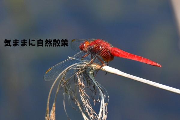 201507121735213df.jpg
