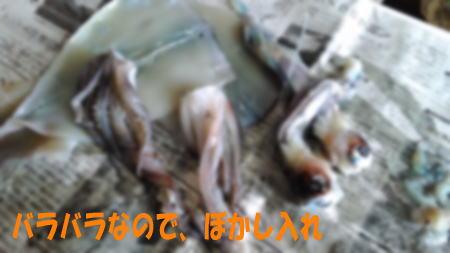 152021_ika_02.jpg