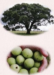 高浸透、高保湿、持続性、酸化抑制作用を持つ!100%オーガニック『ヴァーチェ 最高峰マルラ美容オイル』効果・口コミ。