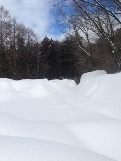 3度目の雪 (1)