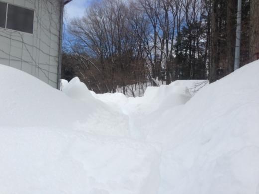 3度目の雪