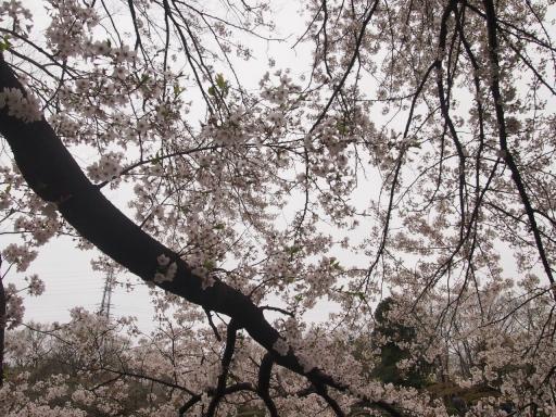 20150404・小金井空04