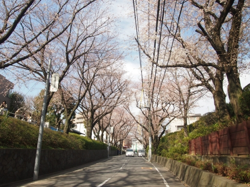 20150523・桜01・0328・東京桜坂