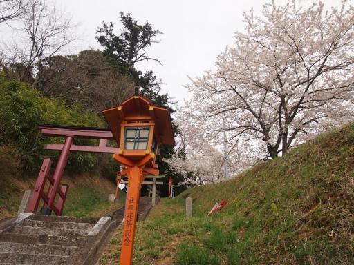 20150523・桜12・0419・三春さくら湖稲荷神社