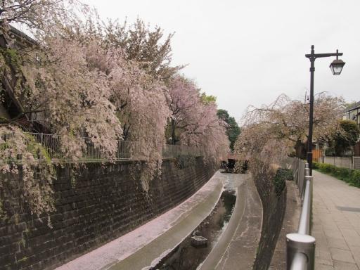 20150523・桜07・0411・妙正寺川