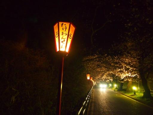 20150523・桜16・0419・岳温泉桜坂