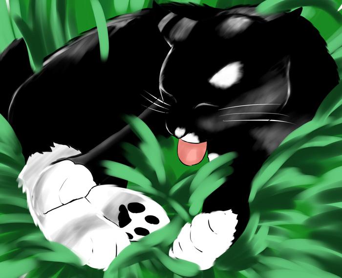 stray_cat02.jpg