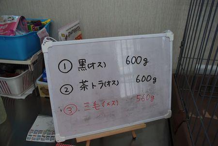 DSC_0316.jpg