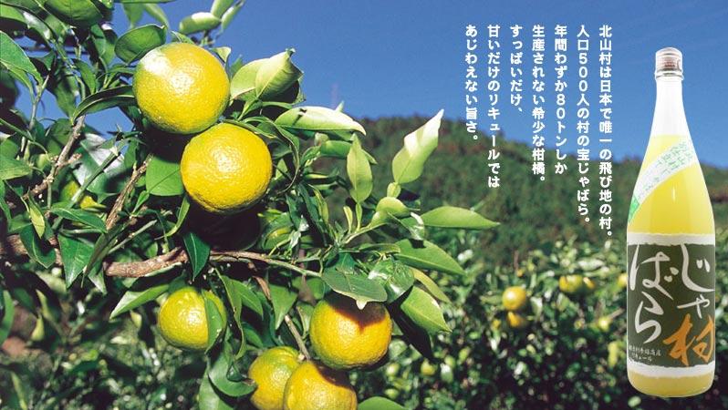 jyabara-h1.jpg